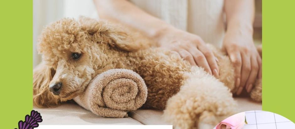 Akupressur Samen zur Stimulation von Akupunktur Punkten auch beim Hund