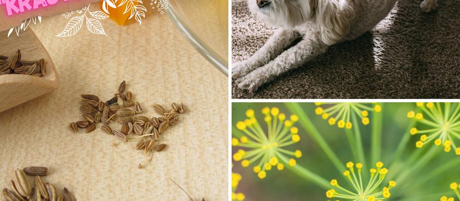 Aua-Wau-Bauch - Kräutermischung für Bauchweh bei deinem Hund