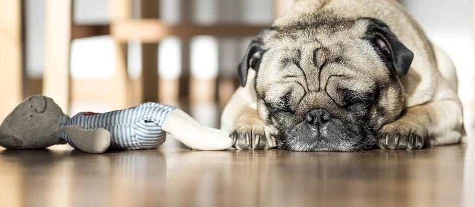 HUNDEGESUNDHEIT - heute: Hormone Hormone, auch bei unseren Hunden ein großes Thema
