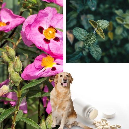 Z-CISTUS | Kapseln für Hund und Mensch