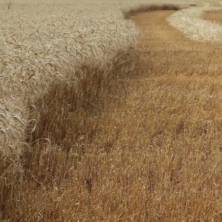Agricultural Land in Lakewood Prairie