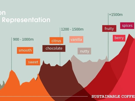 What does elevation have to do with how your coffee tastes? (More than you think!)