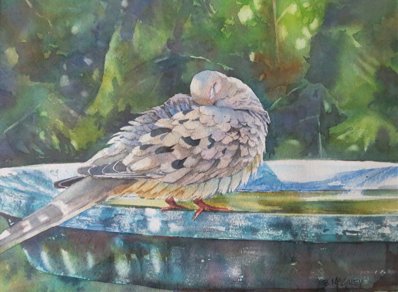 BMcGuey17-03 - Mourning Dove.jpeg.jpg
