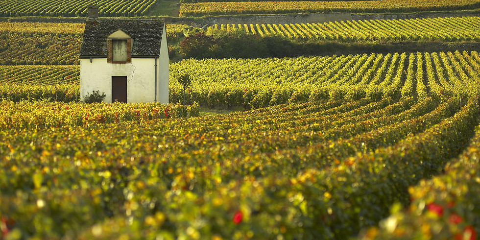 Beaune - A curious paradox in history