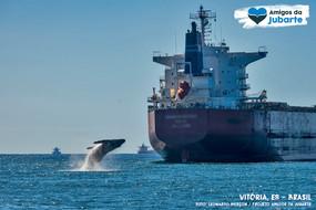 A Importância e Desafios do Monitoramento de Cetáceos em Zonas Portuárias