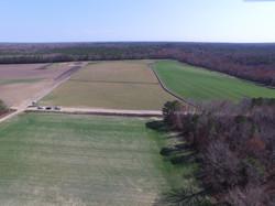 Landscape wheat