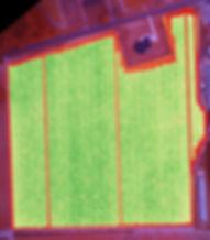 NDVI analysis overlayed on the orthomosaic image