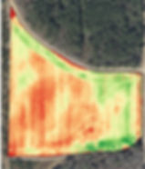 Drone NDVI image of wheat