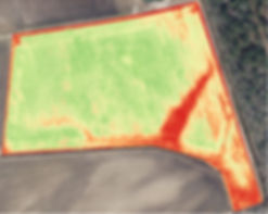 Visual NDVI of soybeans captured with drone.