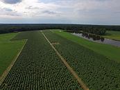 Drones Farmin Agriculture