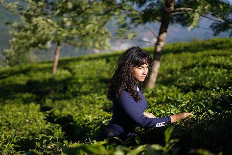 Tea-trails-1.jpg