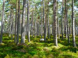 forest-272595.jpg