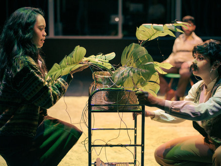 Very Nice Pot Plants to Purify the Air and Enrich Your Life (Theatre Works)