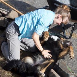 Ama le chien