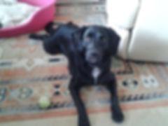 Dog boarding & daycare in Aberdeen