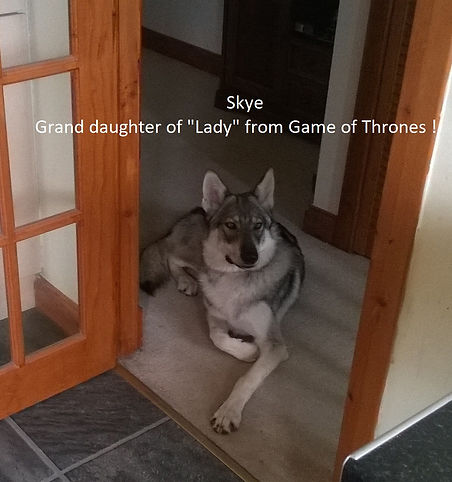 Skye, granddaughter to Lady from Game of Thrones !