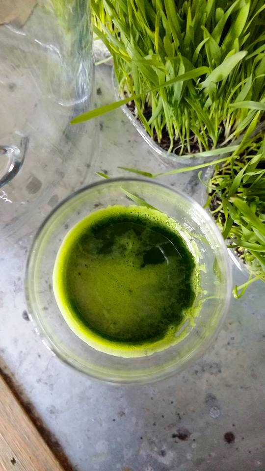 Powerful wheatgrass juice