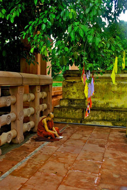 Monk under The Bodhi Tree, India