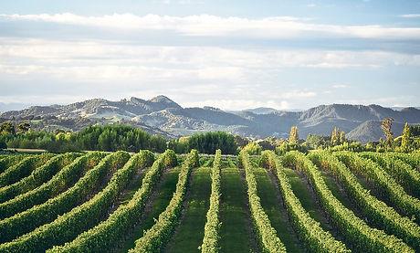 Gisborne Wineries.jpg