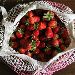 Dehydrating Garden Produce to Preserve It