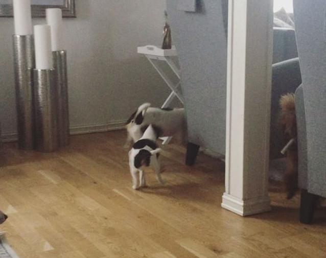🙄🐾😂 #puppiesofinstagram #puppiesofins