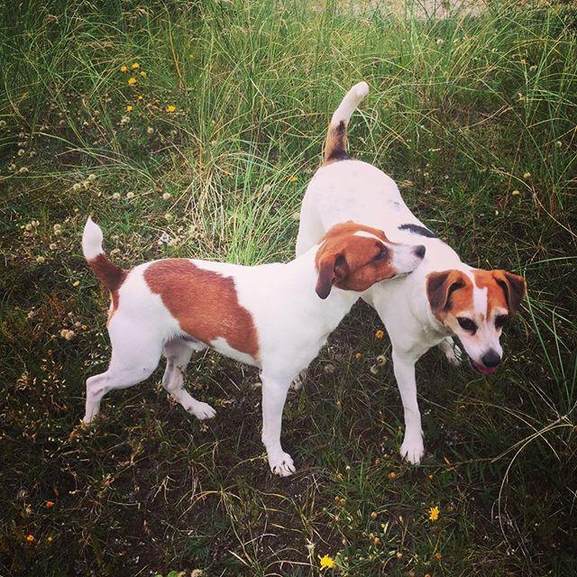 #doglovers #dogofinstagram #dogsofinsta