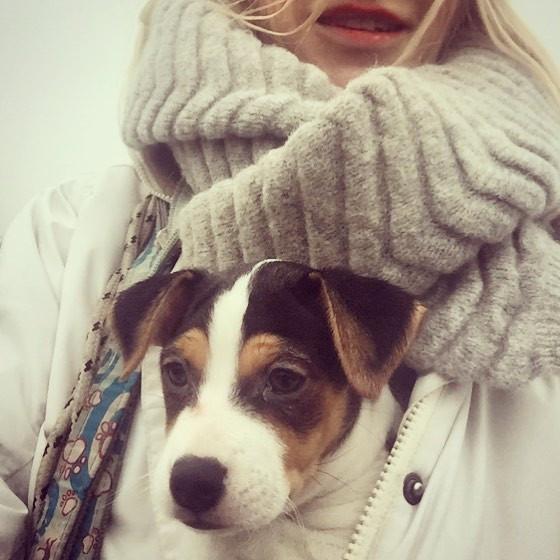 #hundliv #hund #dsg #dansksvenskgårdshun