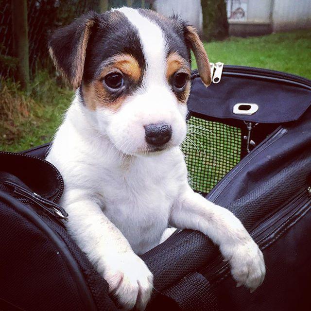 #dogstagram #dogsofinstgram #dog #dogsof