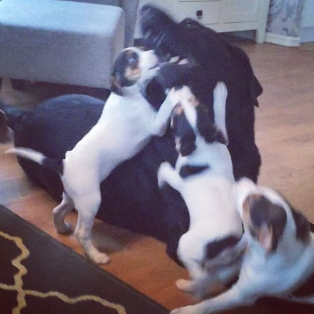 The puppies and sweet adorable Maia the