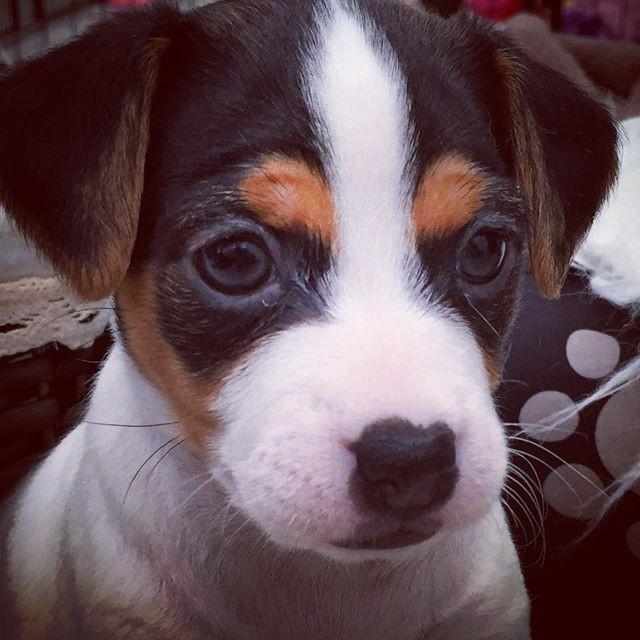 #dogsofinstgram #dog #dogsofinsta #dogso