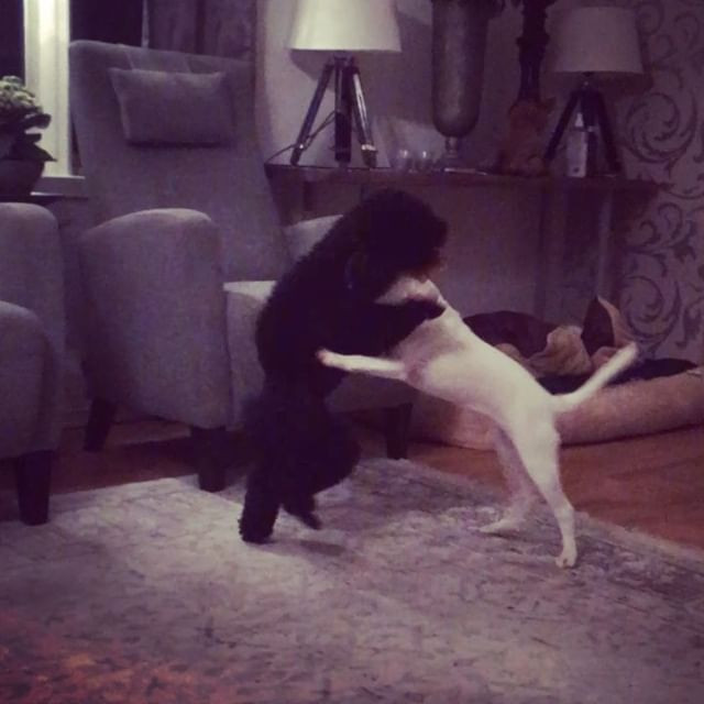 Gaia and Kaizer are playing like crazy �