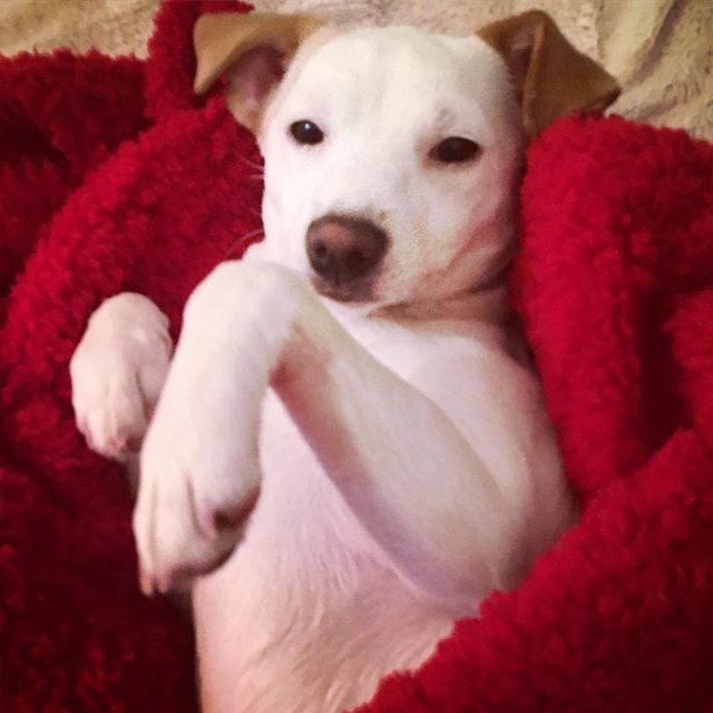 Gaia is cuddling up in her new blanket �