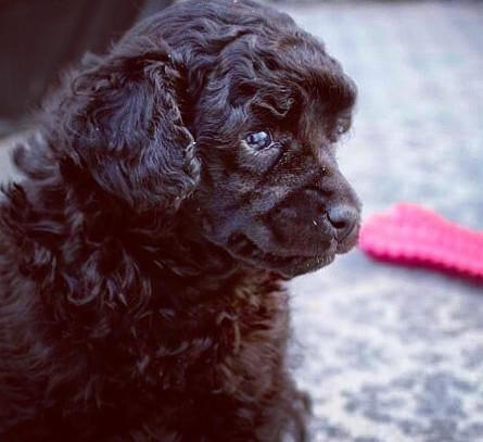 #puppylove #puppiesofinstagram #pupsofin