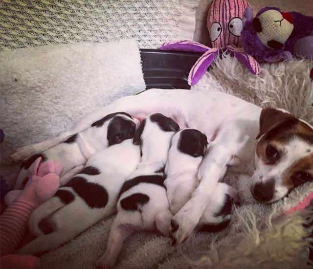 Isa and her puppies #Gratulere med dagen