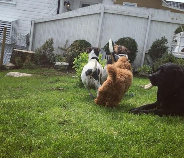 #dog #dogsofinstagram #dogs_of_instagram