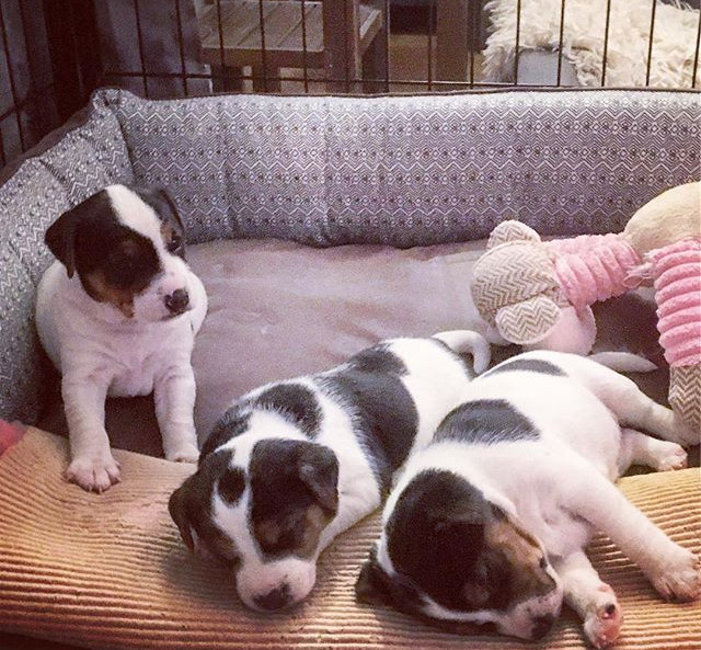 Our F litter from left Fab & Fame´s Fash