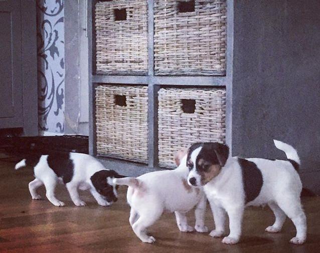 #puppiesofinstagram #puppiesofinstagram