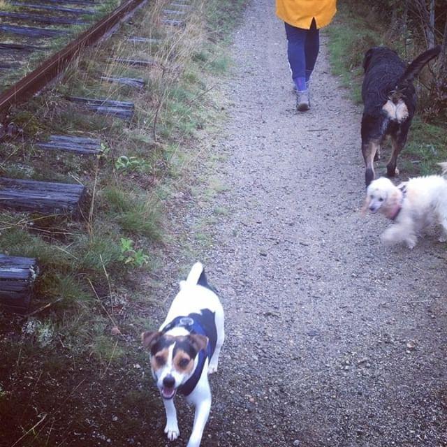 We had a nice walk with Randi and Aimy t