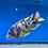 Thumbnail: OB - Blueberry Banana