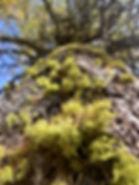 Mund-Brischeru 18.10.08b (9).jpg