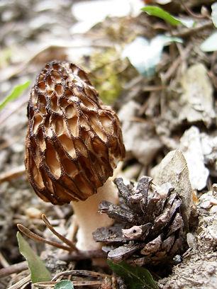 Les_senteurs_de_la_forêt_(18).JPG