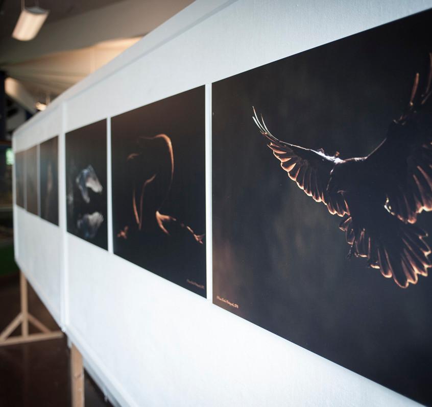 En af de smukke udstillinger