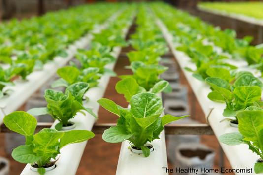 organic-hydroponic-produce_mini.jpg