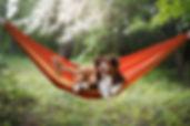two cute dogs lying in a hammock in natu