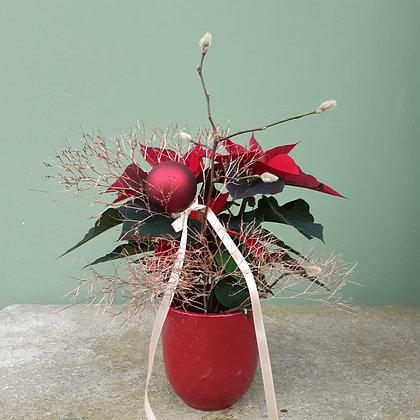 Weihnachtsstern dekoriert und Übertopf; Höhe ca. 40cm