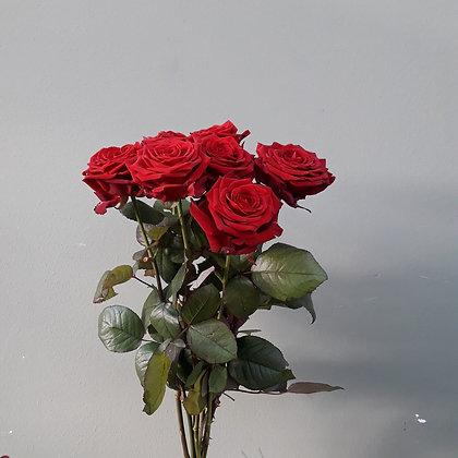 Schnittrose rot; Länge ca. 60cm. Preis per Stück