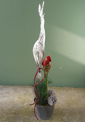 Amaryllis rot, dekoriert, im Metalltopf