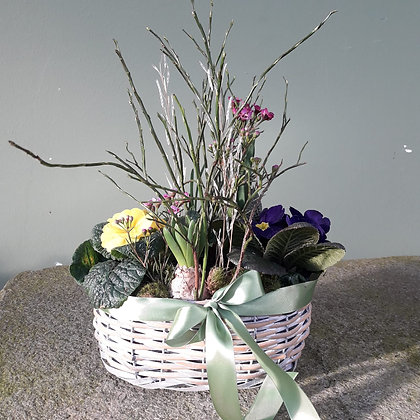 Frühlingskorb bepflanzt; ca. 25cm Durchmesser