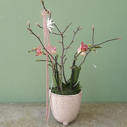 Orchidee midi, rose' mit Übertopf; Höhe ca. 35cm