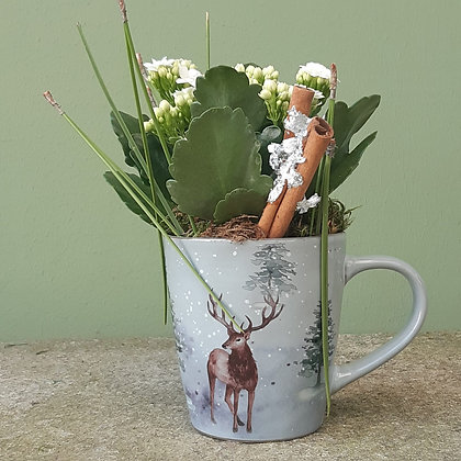 Kalanchoe mini in der Hirschtasse,